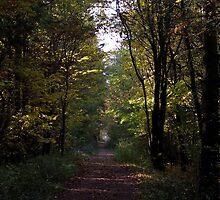 Autumn Forest by SophiaDeLuna