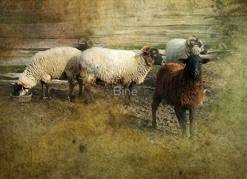 Mount Vernon, Sheep by Bine