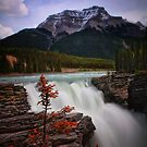 Athabasca Falls on Bow River, Alberta Canada by Margaret Metcalfe