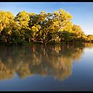 River Gum Reflections!  by Anna Ryan