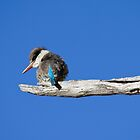 Striped Kingfisher by eMichaelJames