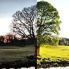 Winter/Summer in the Lake District by John McGrath