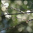 Dewdrops and Bokeh by smalletphotos