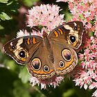 Buckeye Autumn Glory by Robert E. Alter / Reflections of Infinity, LLC