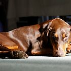 Milly in the sun by Daniel Pertovt