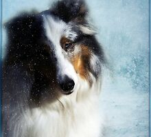 Winter Portrait by jodi payne