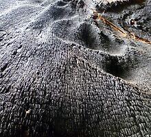 Tree Bark  by peterthompson