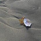 Fragment of shell by nzpixconz