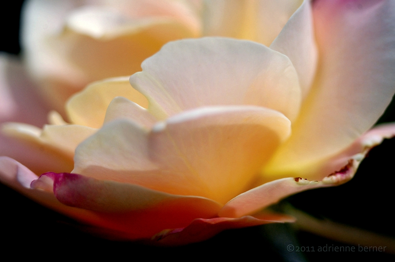 Imperfect Beauty by Adrienne Berner