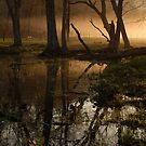 light over the swamp by dc witmer