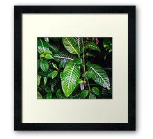 Rainforest foilage  Framed Print