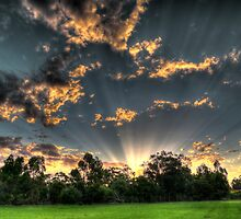 setting suns rays through the trees #1 by BigAndRed