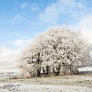 Frosted Copse by Anne Gilbert