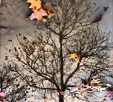 reflected Fall... by Russ Styles