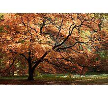 Magnificent Autumn Photographic Print