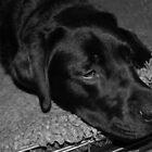Sleeping black Labrador by MsHannahRB
