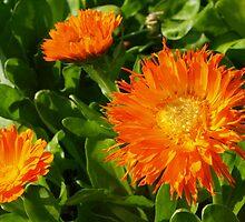 Orange porcupine by ♥⊱ B. Randi Bailey
