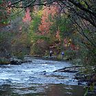 Fishing The River At Beavers Bend by Carolyn  Fletcher