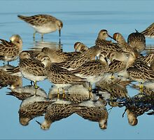 Jigsaw - Reflections at Ash Island by Alwyn Simple