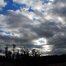 Dark Skies by Robin Lee