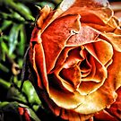Orange Rose by Robin Lee