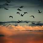 Flying Into the Sunset by Rose Landry