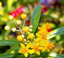 Yellow flowerets by ♥⊱ B. Randi Bailey