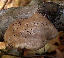 Fungus on Tree by SophiaDeLuna