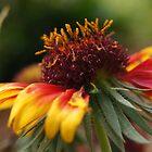 Flower Macro by hubcap