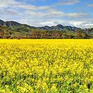 Flinders Canola Fields by Adam Gormley