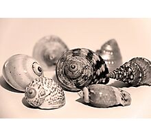 Small Collection of Shells Photographic Print
