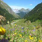 Flowery Pyrennees by klarutshka