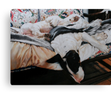 Bosun and Isis Sleeping Canvas Print