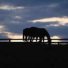 Evening in the Bluegrass by Laura  Donnell