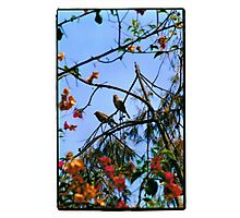 Sparrows Photographic Print