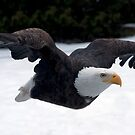 Free as an Eagle by John44