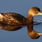 Pied-Billed Grebe by Michael Mill