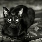 ''Black Beauty'' by Birgitta   †