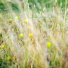 Textured field Grass by White Owl