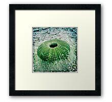 aussie urchin... after a cyclone went thru far north Queensland. Framed Print