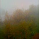Fog.La niebla.Le brouillard . Nebel. Nebbia.Hmla.日本語: 霧. mgła . by Brown Sugar. by © Andrzej Goszcz,M.D. Ph.D