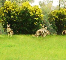 Kangaroos in the green by dre221