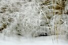 Snowstorm in Valserine forest