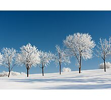 Frosty Trees on a clear Winter day Photographic Print