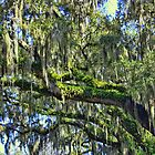 Live Oak Trees With Spanish Moss by AuntDot