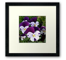 'RICH - IN COLOUR    ('SOLD' - but Not Sold Out!)  Framed Print