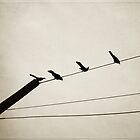 birds on a line by beverlylefevre