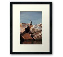 Great Blue Heron on Red Rock Framed Print