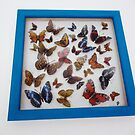 British Butterfly Collection by Holly Daniels