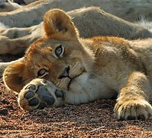 Life is good for cubs in this pride! by jozi1